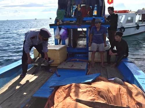 Quang Tri: Giai cuu mot con vich nang 15kg sap len ban nhau