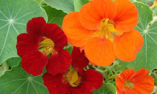Trong hoa nay trong nha vua lam cay canh ca doi lai khong lo muoi
