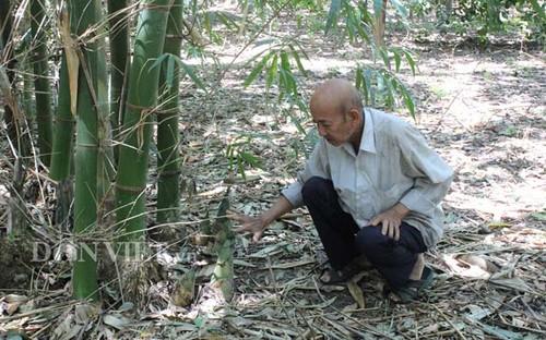 Hon 20 nam cuc nhoc trong 200 ha rung ma khong...ban go-Hinh-3