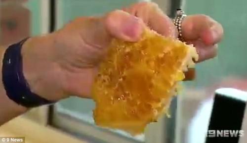 Choang vang phat hien to ong khung moc tu trong tuong nha-Hinh-3
