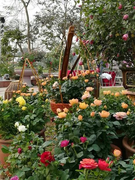 Yeu cau bao cao ve Le hoi hoa hong Bulgaria-Hinh-2