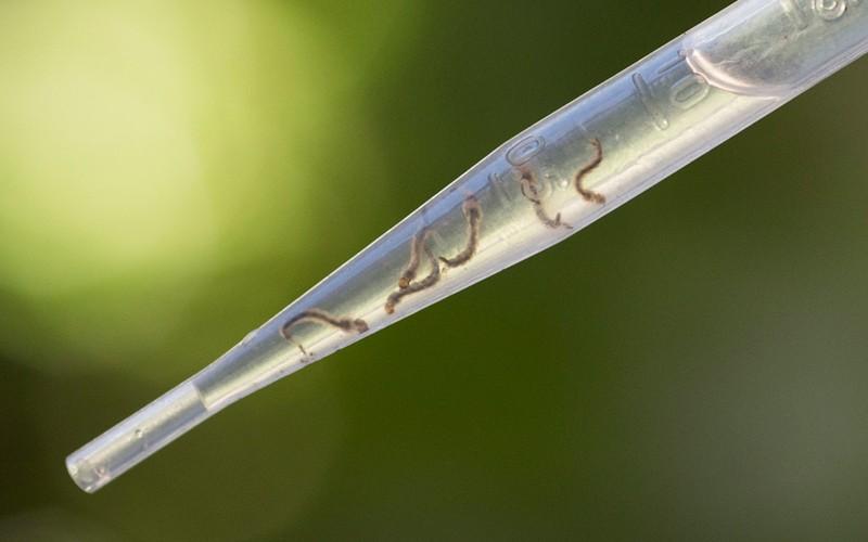 Chum anh virus Zika hoanh hanh o Chau My-Hinh-10