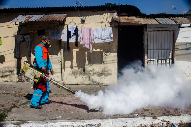 Chum anh virus Zika hoanh hanh o Chau My-Hinh-12