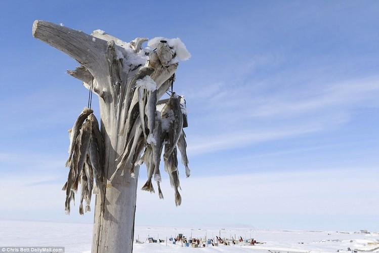 Cuoc song trong ngoi lang sap bi nuoc bien nhan chim o Alaska-Hinh-6