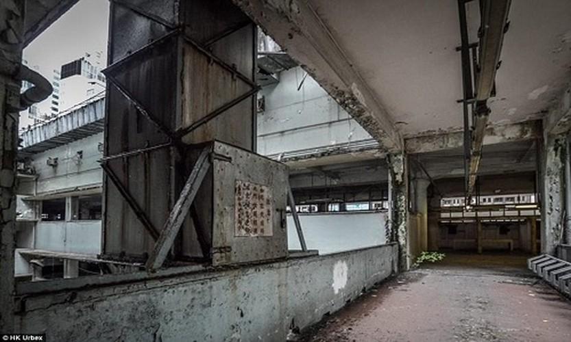"Hai hung ben trong ""cho ma"" bo hoang giua long Hong Kong-Hinh-6"