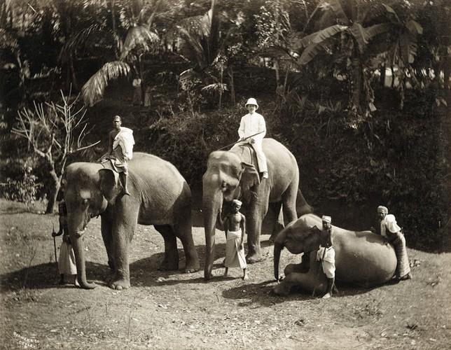 Cuoc song o dao quoc Sri Lanka cach day tram nam-Hinh-12