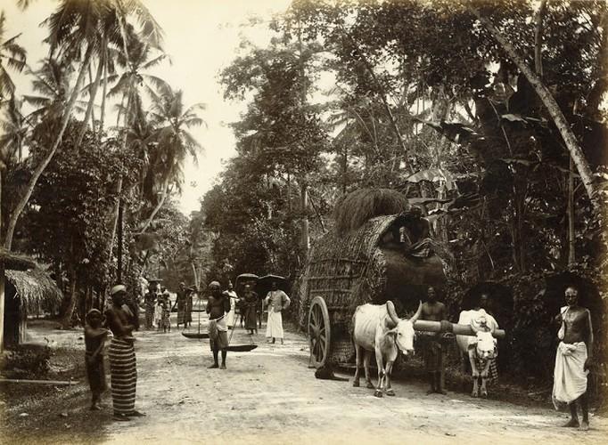 Cuoc song o dao quoc Sri Lanka cach day tram nam-Hinh-5