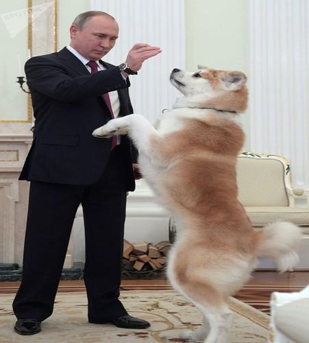 Chum anh Tong thong Putin va tinh yeu doi voi dong vat-Hinh-14