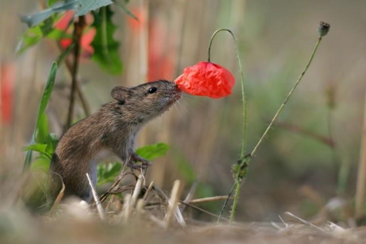 Khoanh khac dep khi dong vat bi hoa quyen ru-Hinh-3