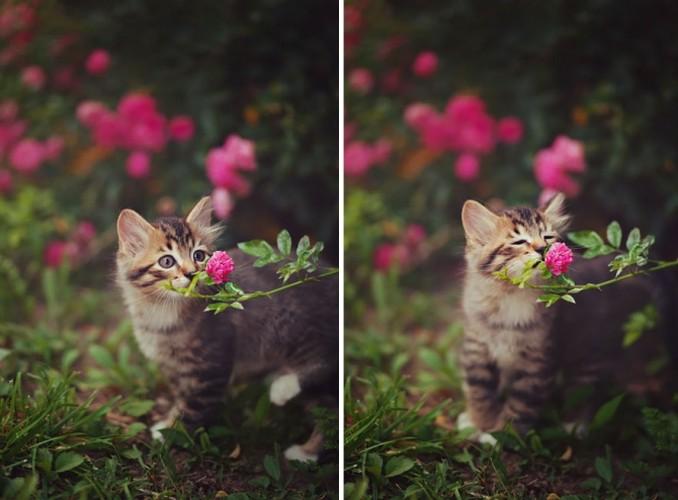 Khoanh khac dep khi dong vat bi hoa quyen ru-Hinh-4