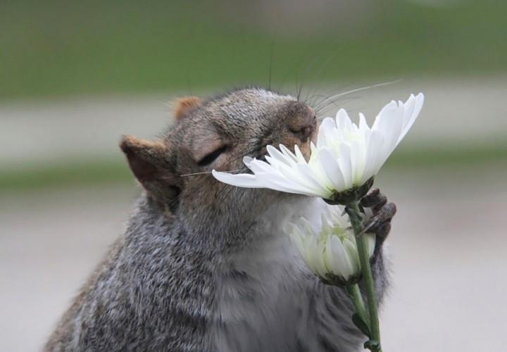 Khoanh khac dep khi dong vat bi hoa quyen ru-Hinh-6