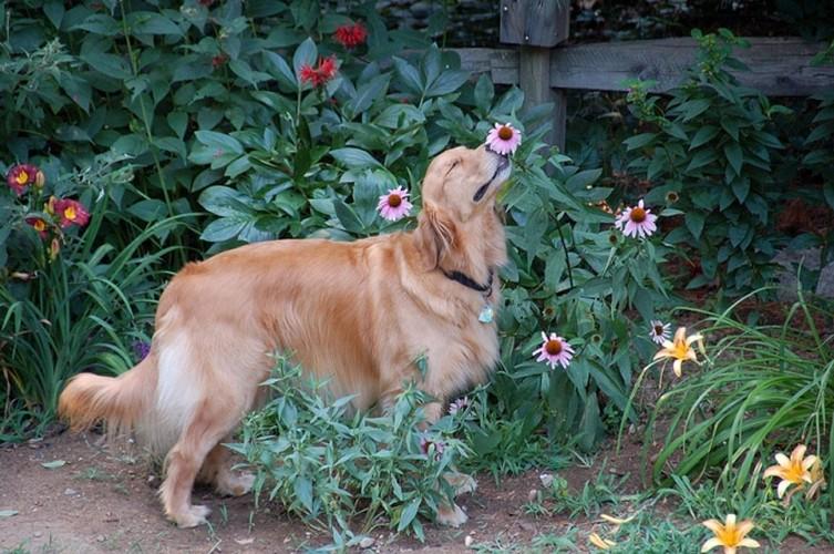 Khoanh khac dep khi dong vat bi hoa quyen ru