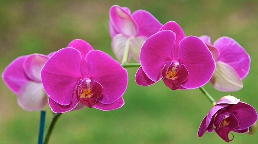 Nhung loai hoa ngay Tet nen chung trong nha de don tai loc-Hinh-3