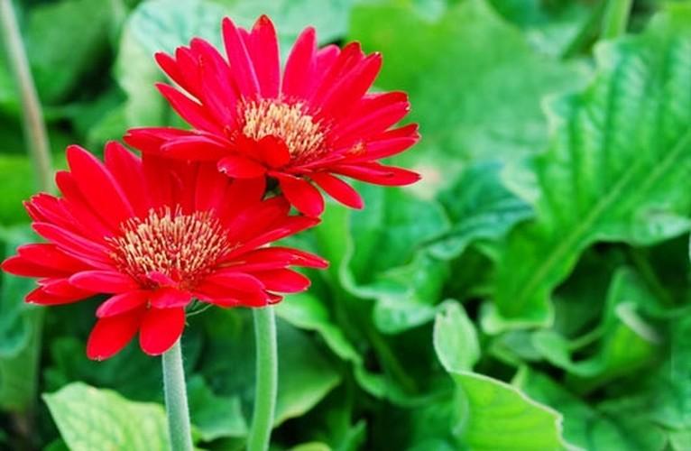 Nhung loai hoa ngay Tet nen chung trong nha de don tai loc-Hinh-5