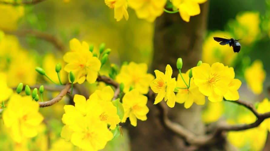 Nhung loai hoa ngay Tet nen chung trong nha de don tai loc