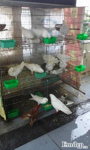 Chum anh Trong rau nuoi chim kin san thuong 60m2-Hinh-13