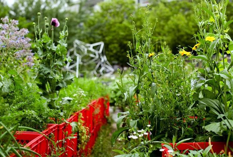 Nong trai 500 giong rau, hoa va thao moc giua long Berlin-Hinh-6