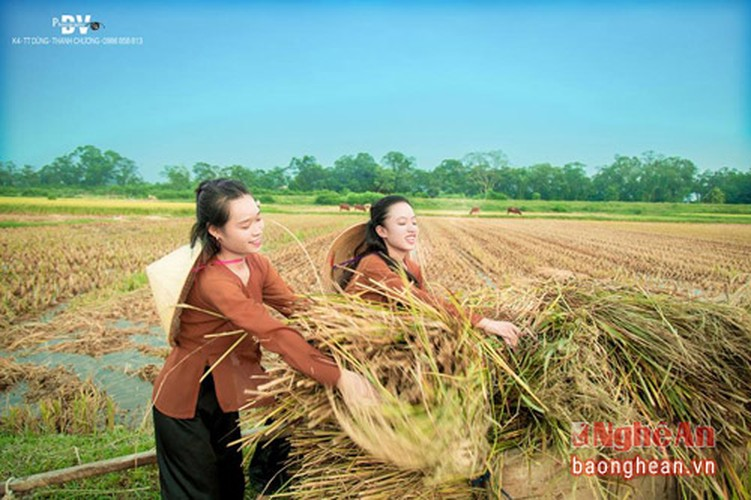 Thon nu khoe ve dep tinh khoi tren canh dong Thanh Chuong-Hinh-3