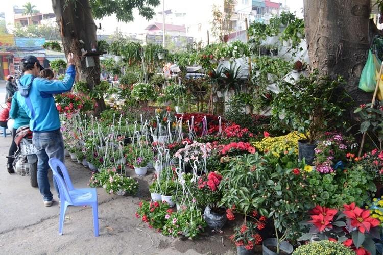 5 cho hoa noi tieng Ha Noi nen ghe tham trong dip Tet-Hinh-8