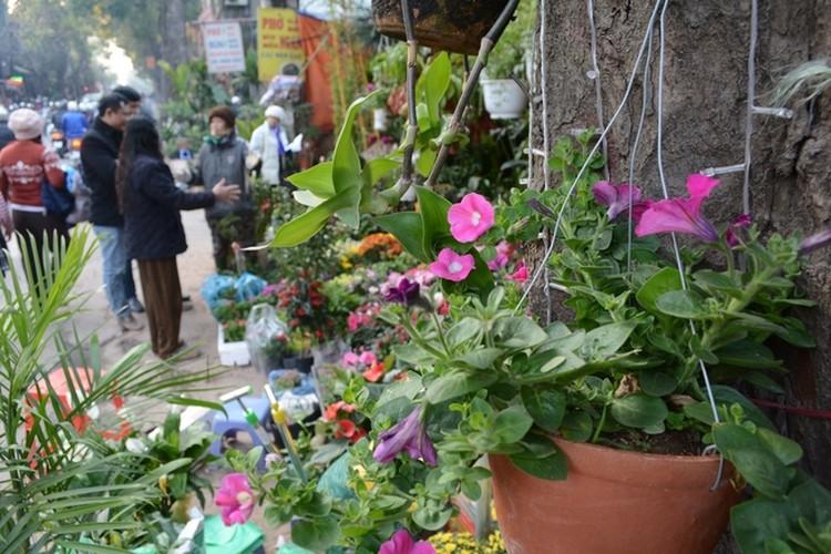 5 cho hoa noi tieng Ha Noi nen ghe tham trong dip Tet-Hinh-9