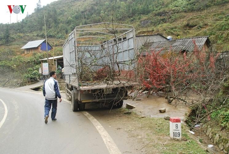 Dao rung Sa Pa ron rang xuong pho-Hinh-15