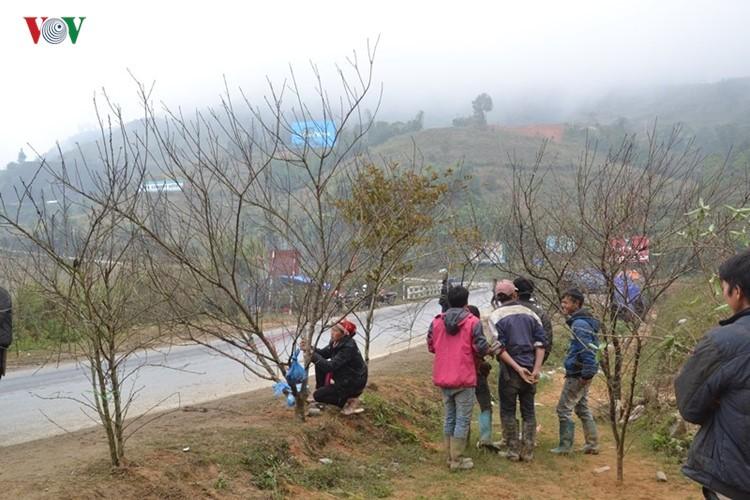 Dao rung Sa Pa ron rang xuong pho-Hinh-3