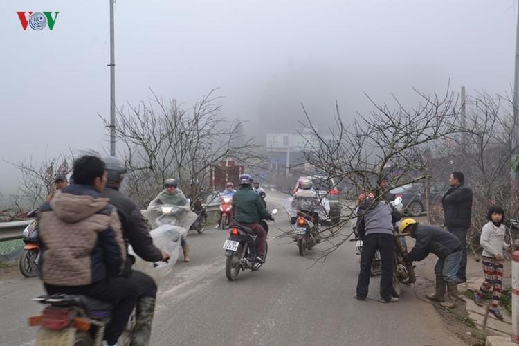 Dao rung Sa Pa ron rang xuong pho-Hinh-7
