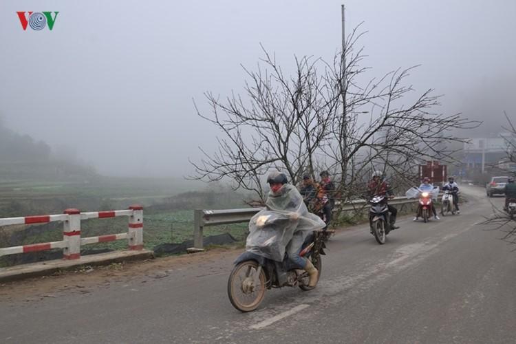 Dao rung Sa Pa ron rang xuong pho-Hinh-8