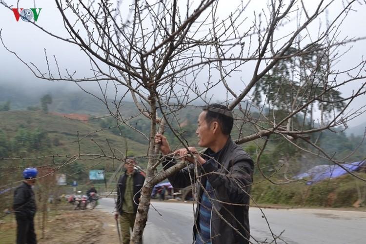 Dao rung Sa Pa ron rang xuong pho