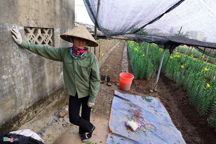 Anh: Hoa ly rung do goc sat Tet, nong dan thiet hai nang ne-Hinh-6