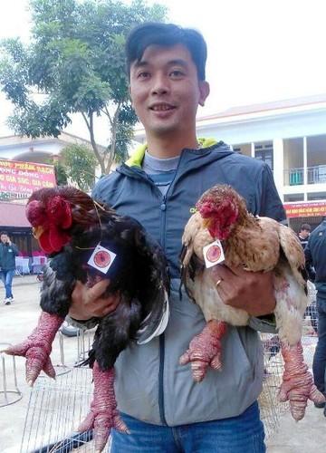Ngam cap ga Dong Tao co doi chan dep nhat Viet Nam
