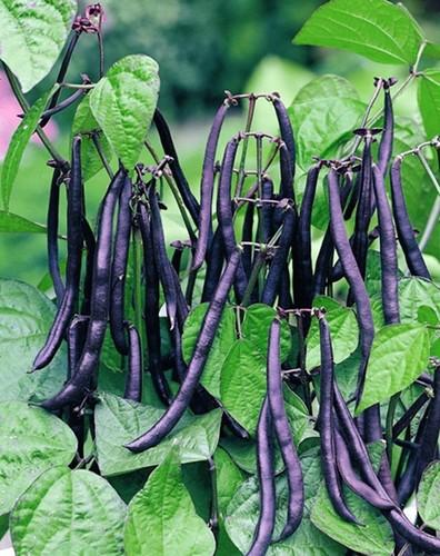 Loat rau cu sac so hop trong trong nha de don Xuan-Hinh-12