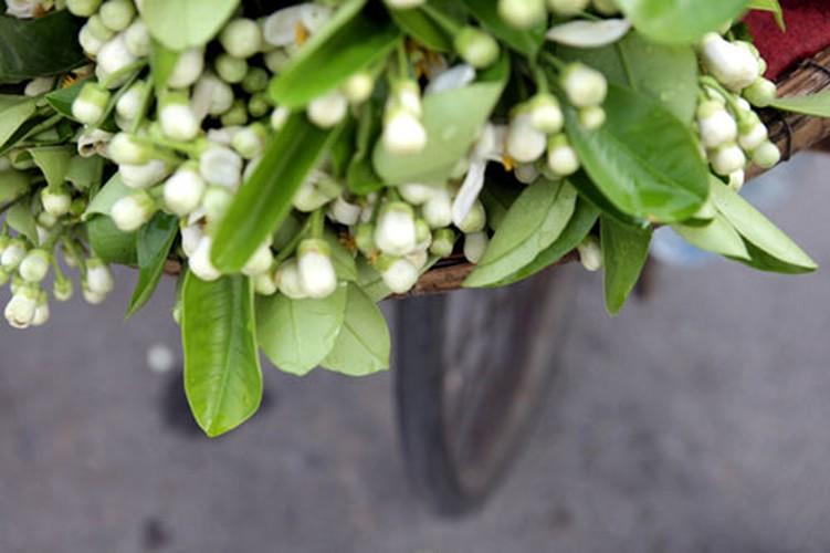 Anh: Mua hoa buoi diu dang xuong pho-Hinh-5