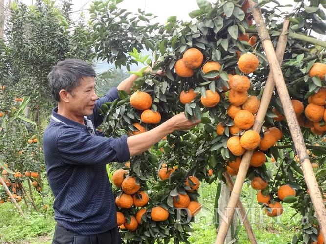 Top 8 loai cam ngon nhat dat Viet-Hinh-3