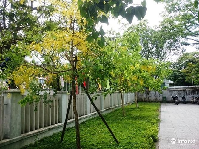 Anh: Hoa muong hoang yen vang ruc Co do Hue giua troi he-Hinh-10