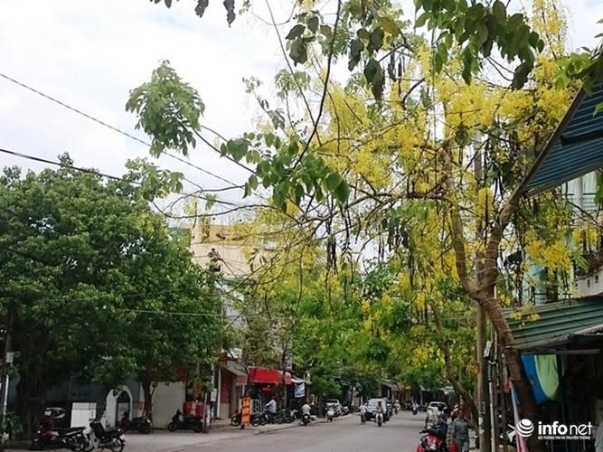 Anh: Hoa muong hoang yen vang ruc Co do Hue giua troi he-Hinh-12