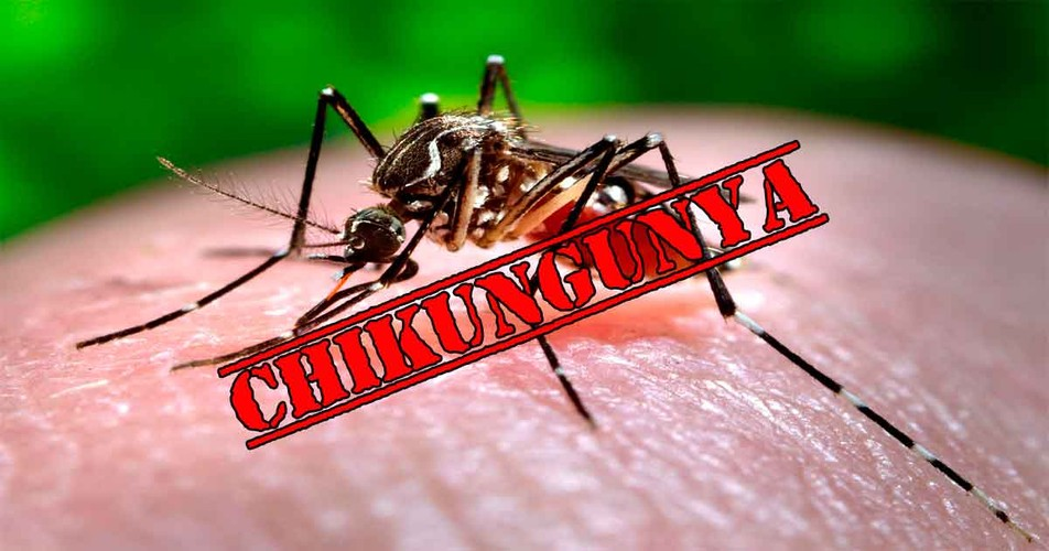 Chuyen gia bat mi cach ngan ngua sot chikungunya-Hinh-2