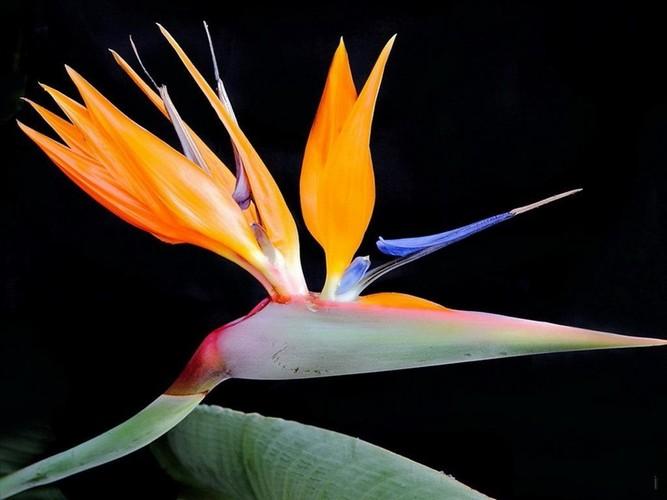 Tan muc loai hoa ki di trong cu nhu... chim-Hinh-2