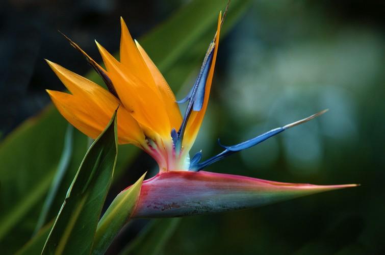 Tan muc loai hoa ki di trong cu nhu... chim
