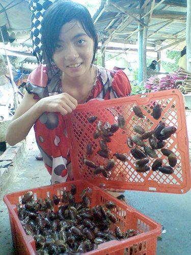 "Kham pha ky thu ve con bo ray ""hao hang"" cua An Giang-Hinh-5"