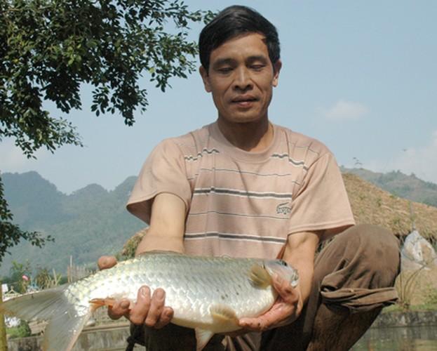Su that kinh ngac ve ca bong dac san Tuyen Quang-Hinh-7