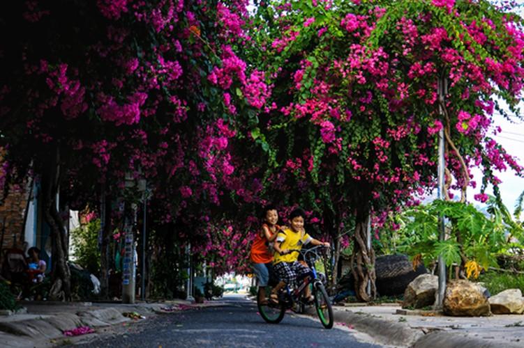 Lac vao cung duong hoa giay dep nhat Nha Trang-Hinh-6