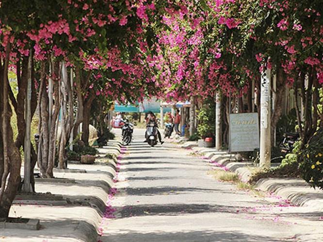 Lac vao cung duong hoa giay dep nhat Nha Trang-Hinh-8