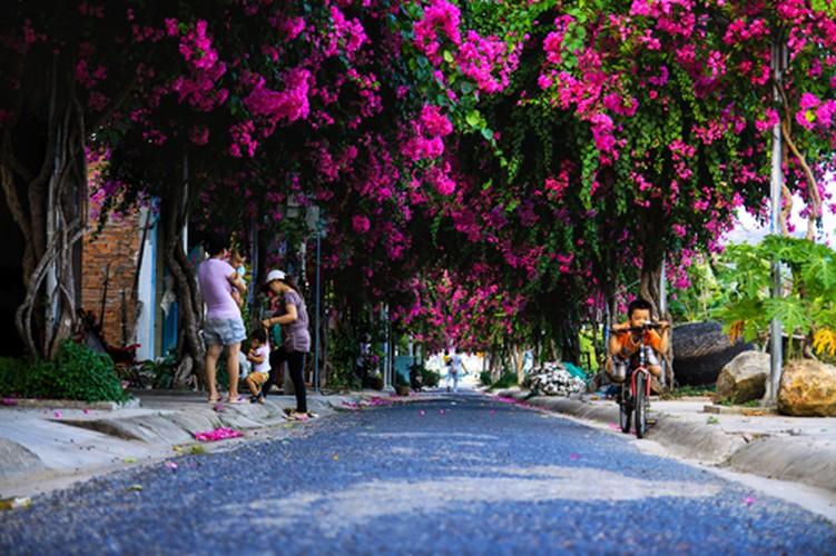 Lac vao cung duong hoa giay dep nhat Nha Trang-Hinh-9