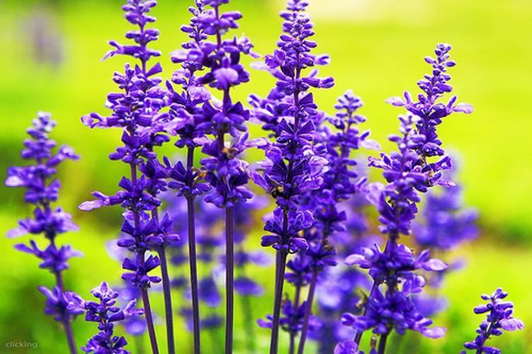 4 loai hoa dep duoc su dung nhieu trong nganh cong nghiep my pham-Hinh-12