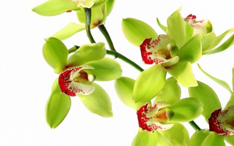 4 loai hoa dep duoc su dung nhieu trong nganh cong nghiep my pham-Hinh-9