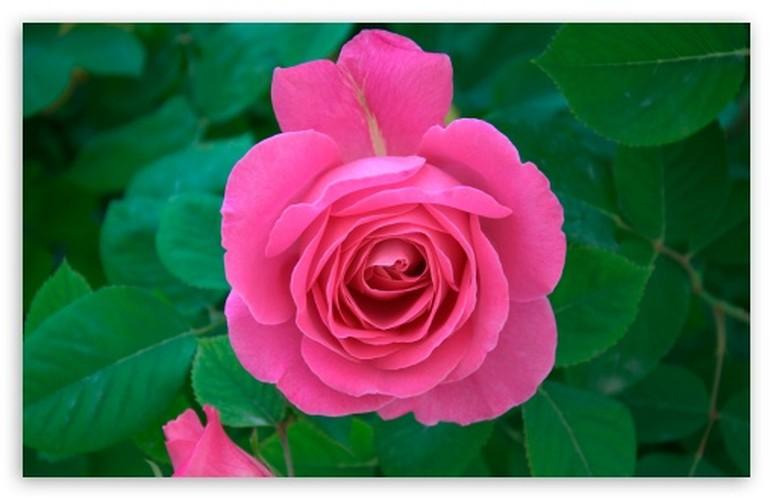 4 loai hoa dep duoc su dung nhieu trong nganh cong nghiep my pham
