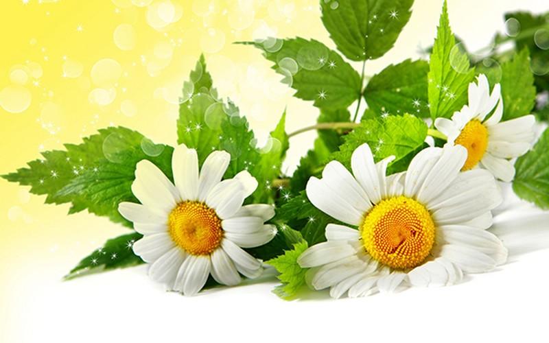 4 loai hoa dep duoc su dung nhieu trong nganh cong nghiep my pham-Hinh-7
