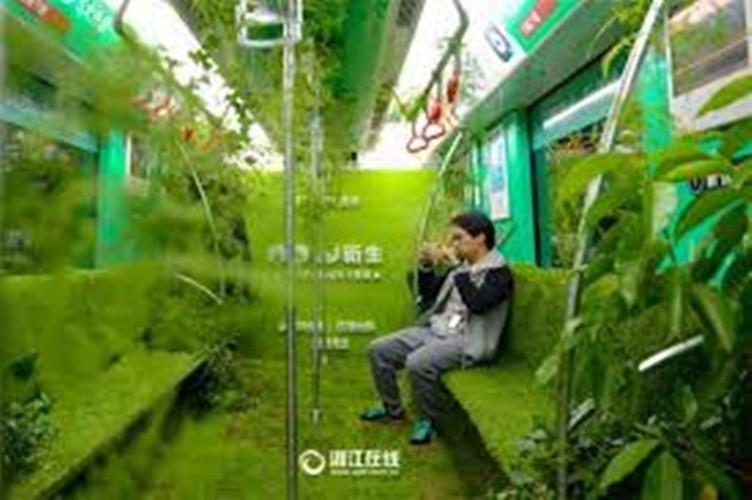 Mat mat ngam tau dien trong cay xanh o Trung Quoc-Hinh-3