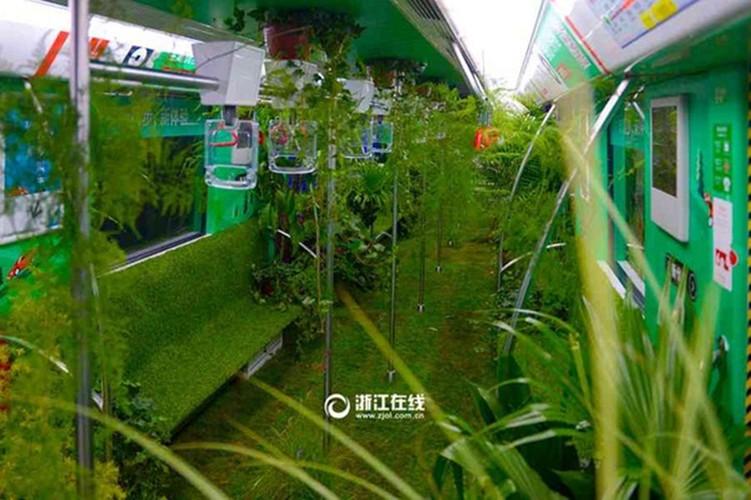 Mat mat ngam tau dien trong cay xanh o Trung Quoc-Hinh-5